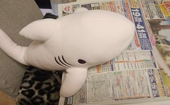 shark-p1.jpg